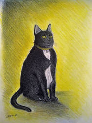 Black and yellow by Shyrenn