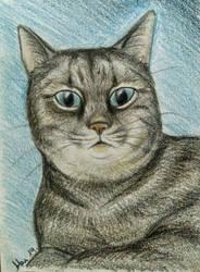 Cat by Shyrenn