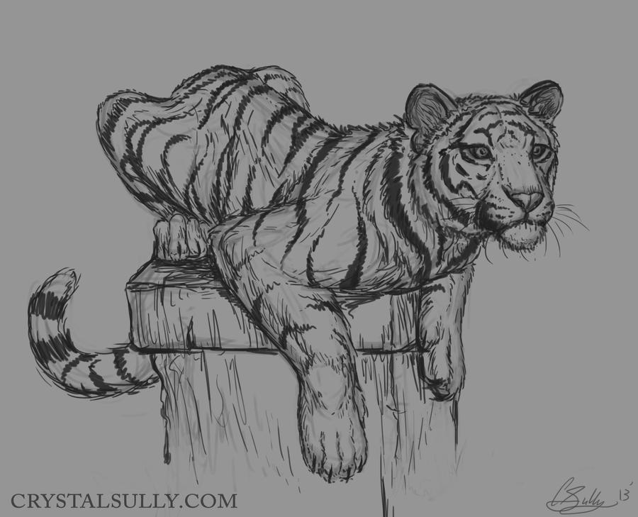 Tigre Sketch: Tiger Sketch By CrystalSully On DeviantArt