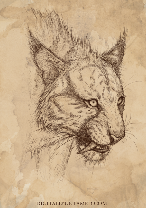 Maned Tiger by CrystalSully