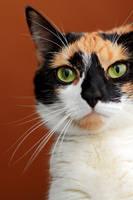 Portrait of a cat: Trixie by Rima-Deer