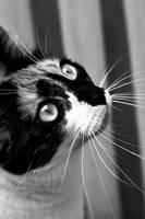 Whiskers by Rima-Deer