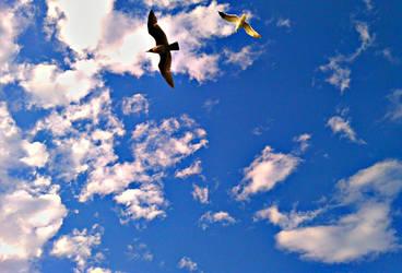 fly away by CaseyDN