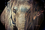 Elephantastic by nprkr