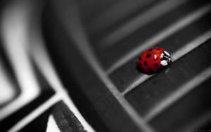 Ladybug by nprkr