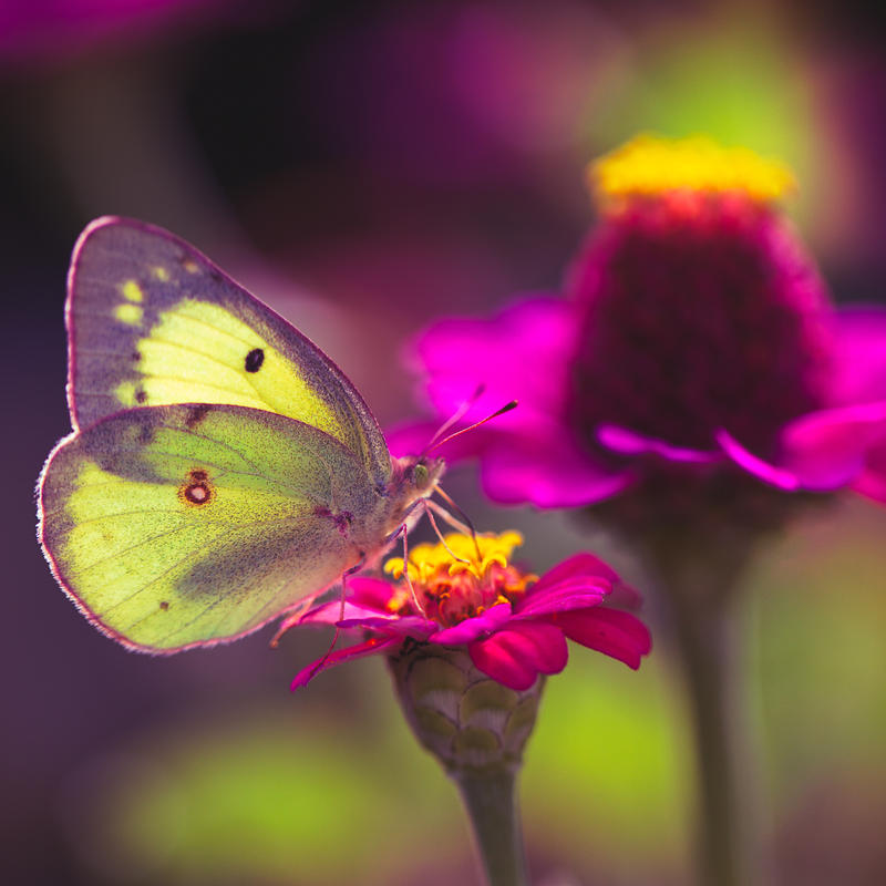 butterfly by nprkr