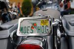 Moes Hog