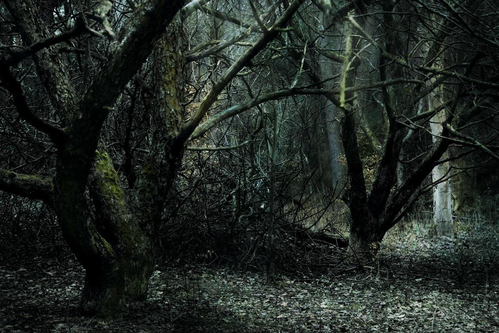 orchard by fantasmica