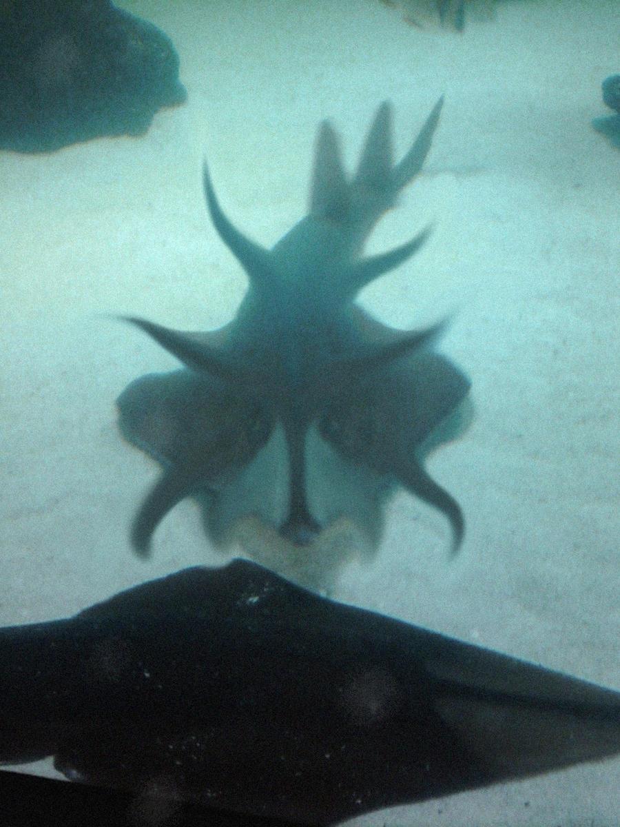 Odd Fish at Houston Aquarium by systemcat on DeviantArt