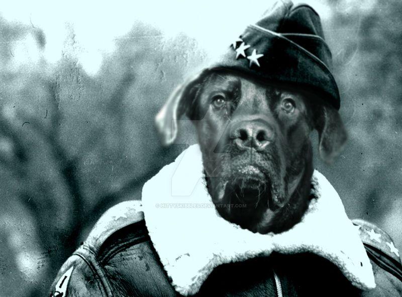 Kaiser in bomber jacket by hittyskibbles