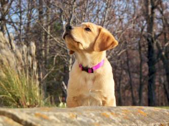 Pondering puppy