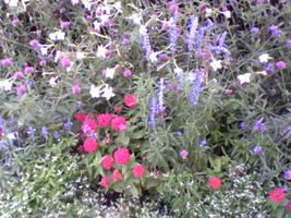 Wildflowers . . .