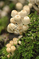 little mushrooms 1 by marob0501