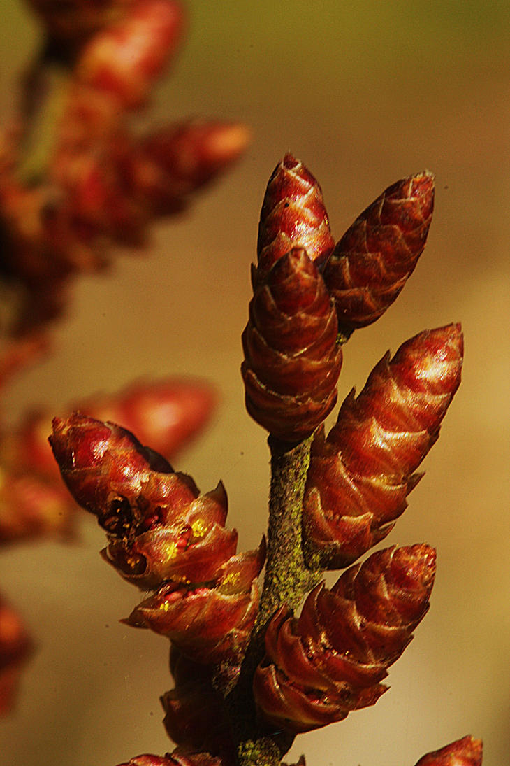 buds on branches by marob0501
