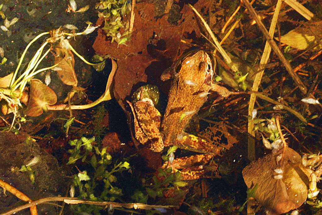 first frog this year by marob0501