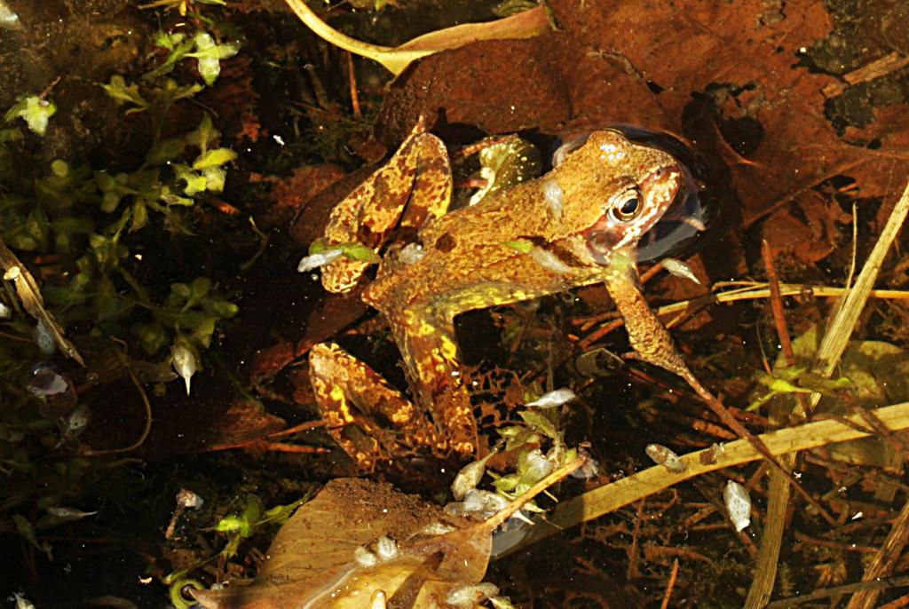 froggy turned by marob0501