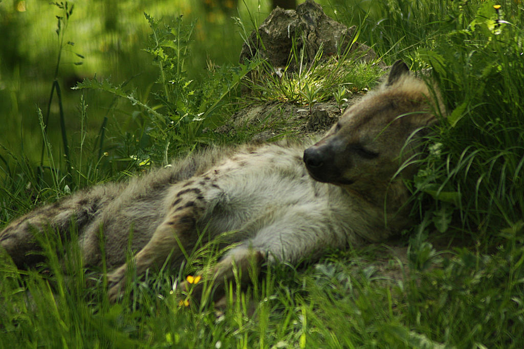 sleepy by marob0501