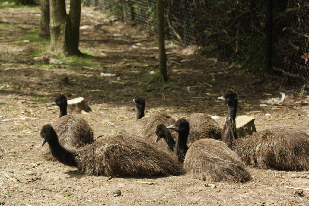 childs of emu by marob0501