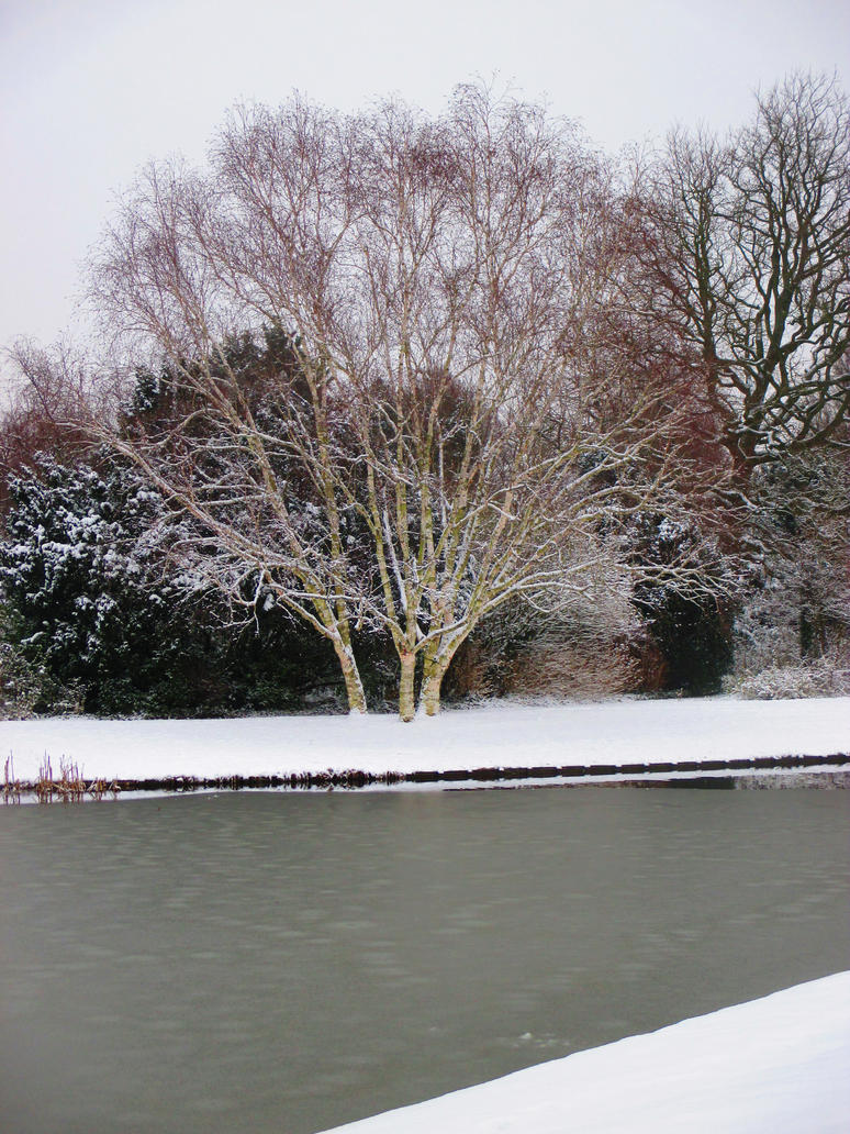 birch in snow by marob0501