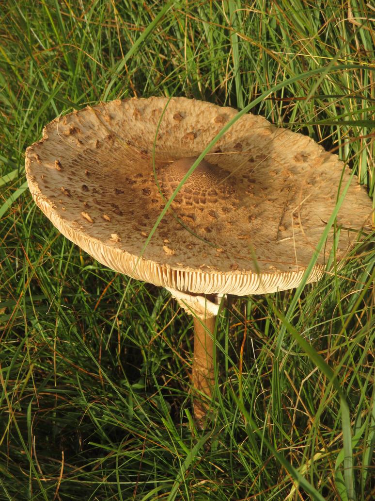 fungi by marob0501