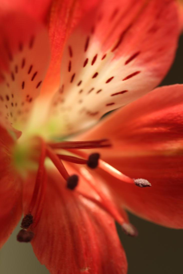 lily by marob0501