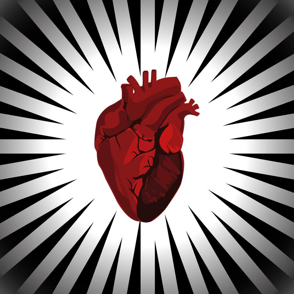 Vector human heart outline