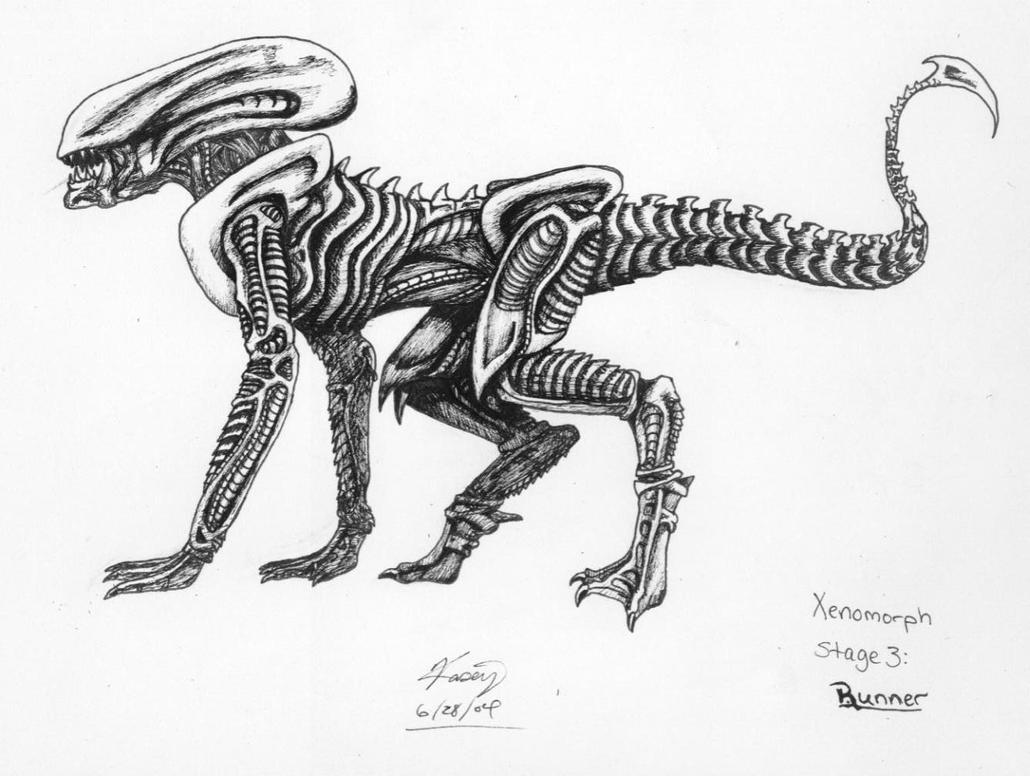 Pictures of Xenomorph Runner - #rock-cafe