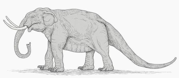 Komodo Elephant