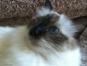 KoshkaAlisa's Profile Picture