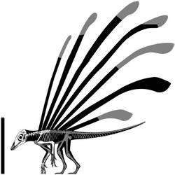 Longisquama insignis Skeletal Reconstruction