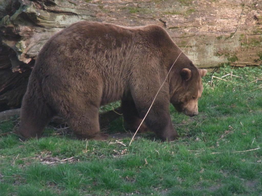 Malvorlagen Bären - Vorlagen & Motiv-Vorschläge - Zeichnen Forum