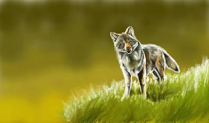 Curious Timberwolf by ArcticIceWolf