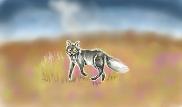 Running arctic fox