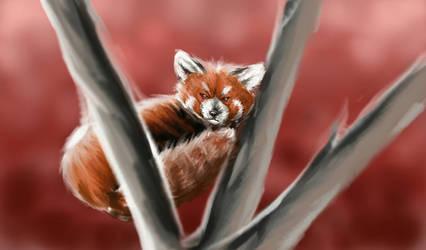 Fall Panda by ArcticIceWolf