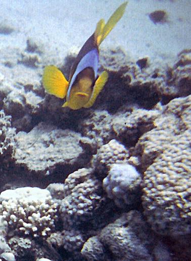 Nemo_Fish_by_desiderata848.jpg