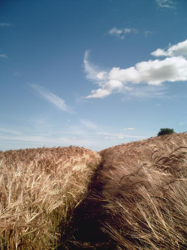Pathway by desiderata848