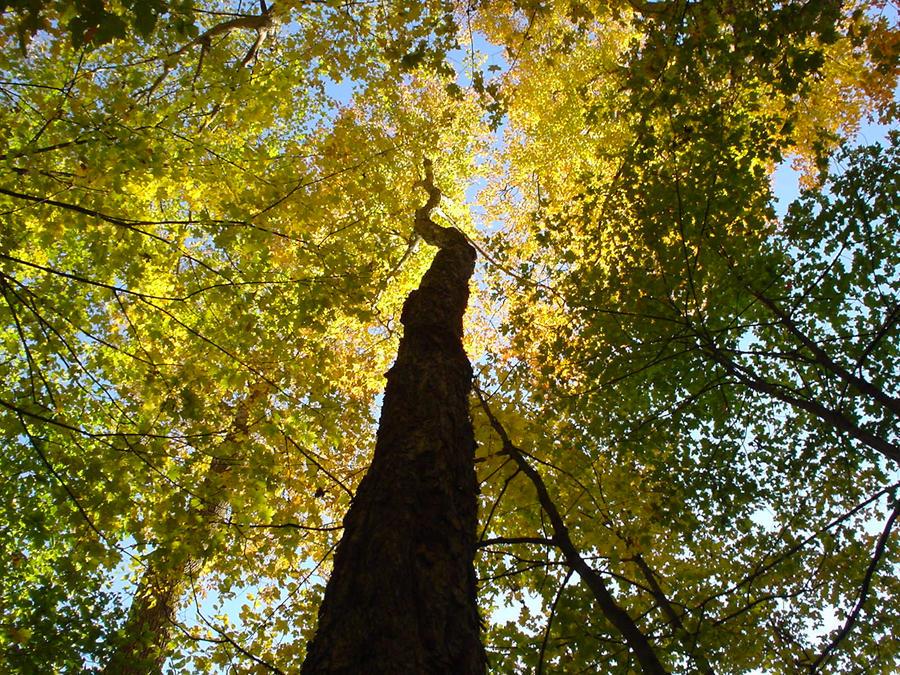 L'arbre des dieux by monts-et-forets