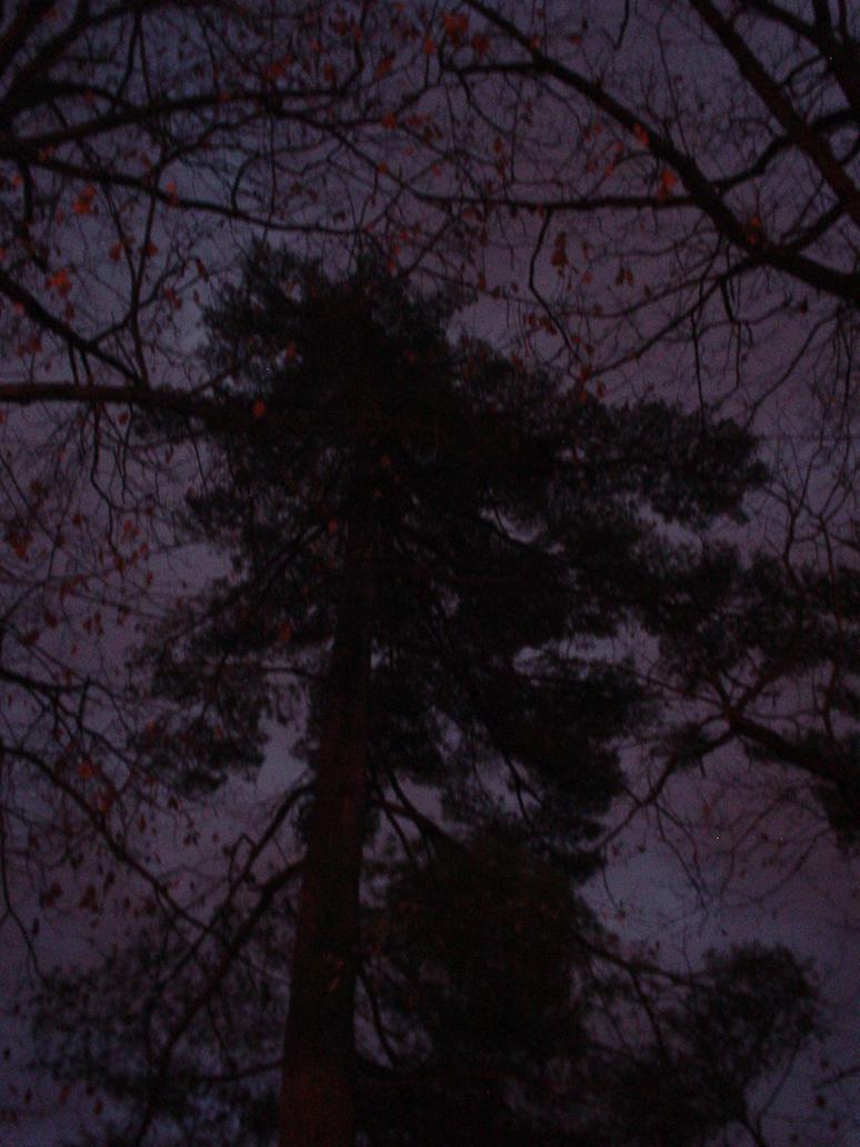 arbre la nuit1 by monts-et-forets