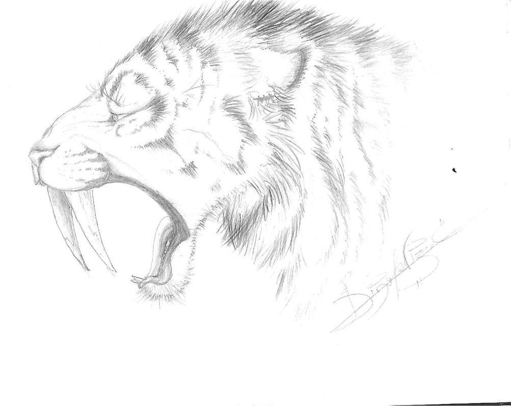 Tigre Sketch: Smilodon Sketch For Jagroar By Jei-Dinofelini On DeviantArt