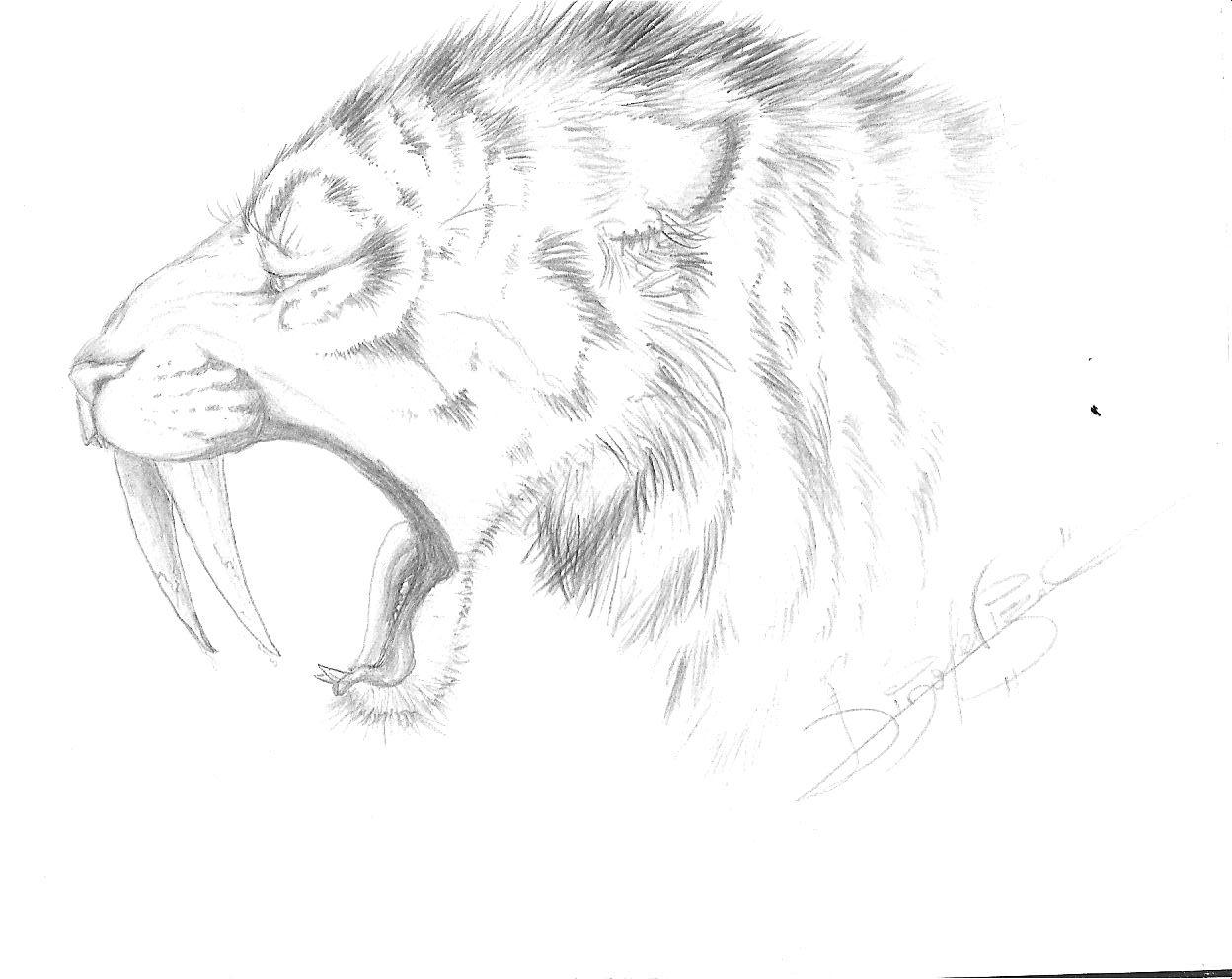 Smilodon Face By Pyroraptor42 On Deviantart: Smilodon Sketch For Jagroar By Jei-Dinofelini On DeviantArt