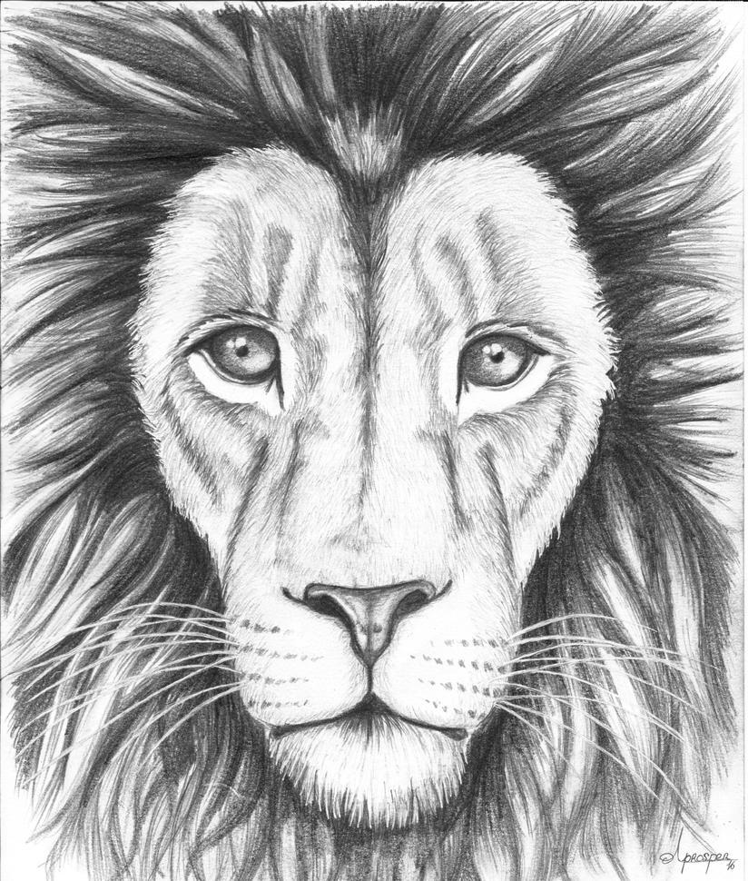 Lion head by TwentyFifthFrame