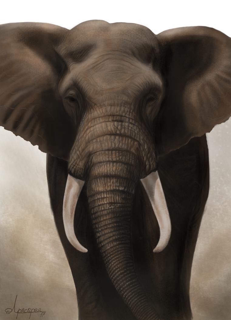 Elephant by TwentyFifthFrame