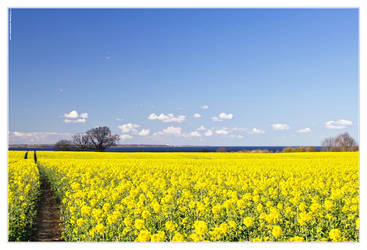 Spring 2014 - Rapeseed arrived by 51ststate