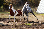 Jumping Horse Stock by Newfie-Stock