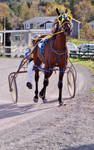 Horse Stock by Newfie-Stock