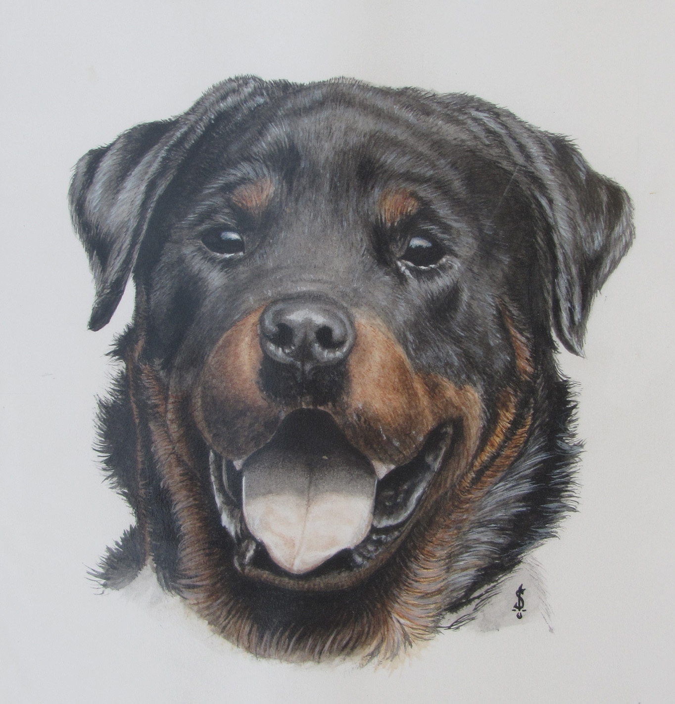 Rottweiler Wallpaper: Rottweiler By WampireW On DeviantArt