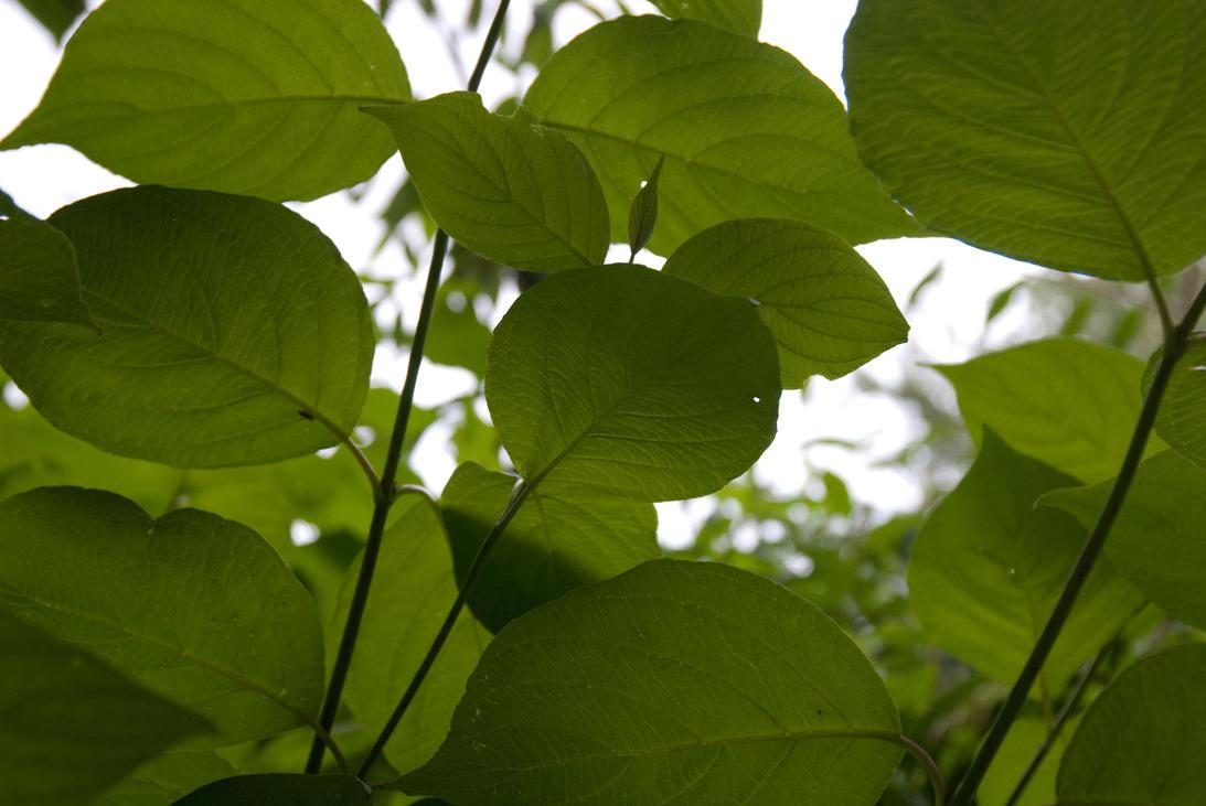 Err.. Leaf by Superluminal420