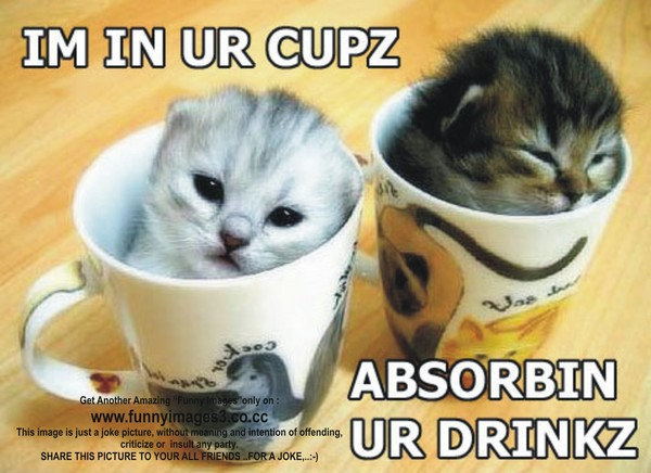 Funny Cats Pictures... by funnyimages3