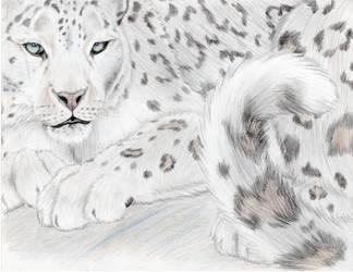Snow Leopard Majesty by mysteriouswhitewolf