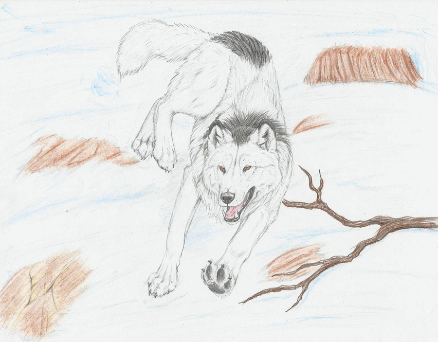 How To Draw Arctic Wolf page 2